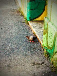 La danza del piccione zoppo