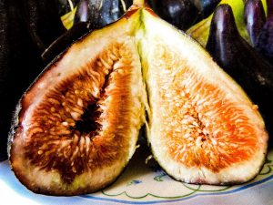 Fig, divine fruit