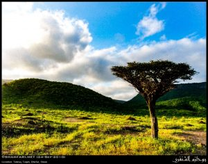 Dhofar, the home of Frankincense